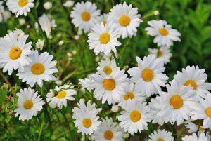 Bloemen voor diverse gelegenheden